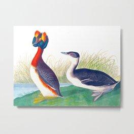 Horned Grebe Duck Metal Print