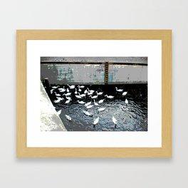 Swans in Berlin 2 Framed Art Print