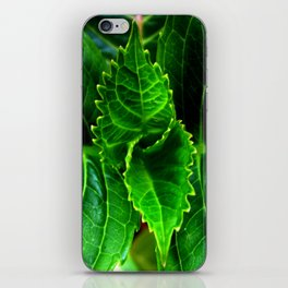 New Plant Growth iPhone Skin
