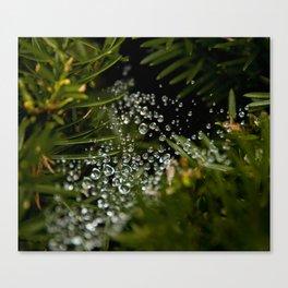 Nature's Ornaments Canvas Print