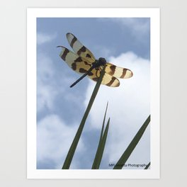 Bruised Dragon Fly Art Print