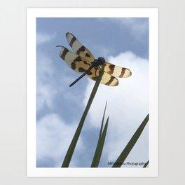 Bruised Dragon Fly Art Print