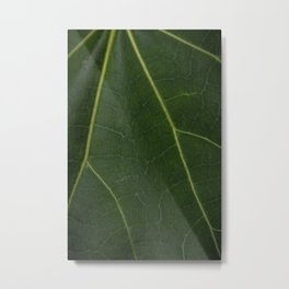 Green Leaf - Nature Photography Metal Print
