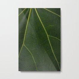 Green Leaf - Nature Photography Metal Print