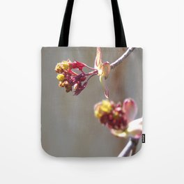 Purple Maple Tree Just Starting to Bud in the Spring Tote Bag