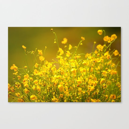 Yellow Mellow Flowers Canvas Print