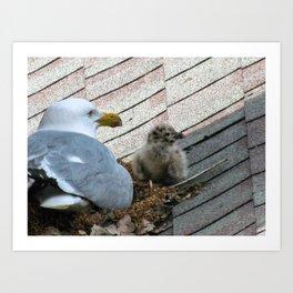 Baby Seagull (1) Art Print