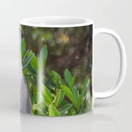 Yellow-crowned Night Heron II Coffee Mug