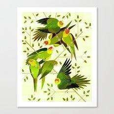 Carolina Parakeets Canvas Print