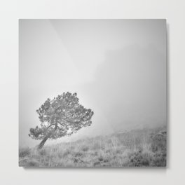 Windy Tree.. Foggy Morning..... S. Huetor Natural Park. Bw. Square Metal Print