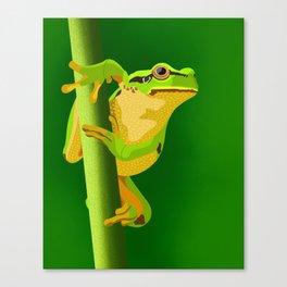 Bullfrog Canvas Print