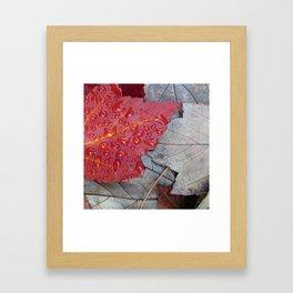 Red Sunset Maple Leaves Framed Art Print