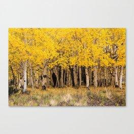 Painted Aspens, San Juan, Colorado Canvas Print