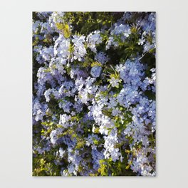 a violet flower in the heart of Athens Canvas Print