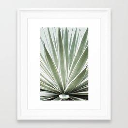 Tropical Century Plant Photography  Framed Art Print