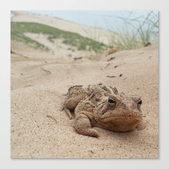 Grumpy Frog Canvas Print