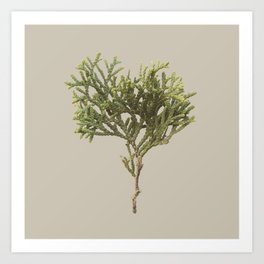 Plants Variations 3 Art Print