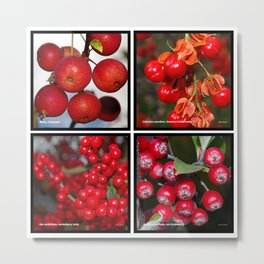 Autumn fruit Metal Print