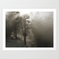 Sunlight and Fog Through Trees Art Print