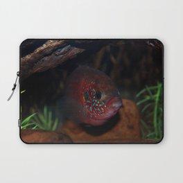 Jewel Cichlid- Red fish Laptop Sleeve