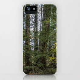 The Woods Around Clear Lake iPhone Case