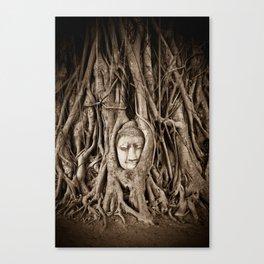 Buddha head in a Banyan Tree in Ayutthaya, Thailand Canvas Print