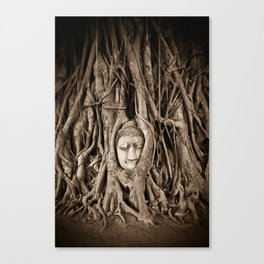 Buddha head in a Banyan Tree in Ayutthaya, Thailand Canvas Print