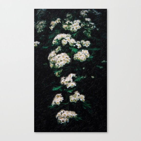abstract almond flowers Canvas Print
