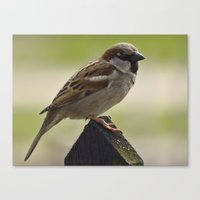 sparrow Canvas Prints featuring Sparrow by PICSL8