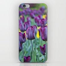 morados iPhone & iPod Skin