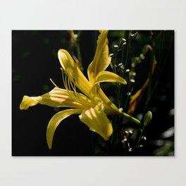 Yellow Flower in the dark Canvas Print
