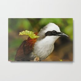 White-crested Laughingthrush Metal Print