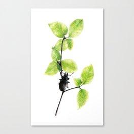Little black bug Canvas Print