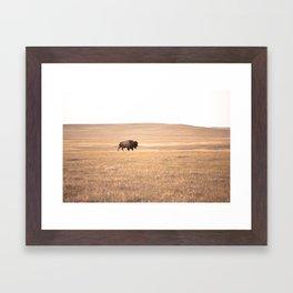 Buffalo Roaming (doing it's thing) Framed Art Print