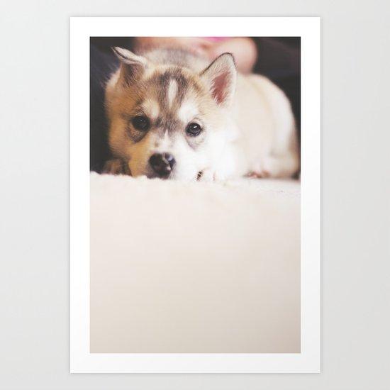 "siberian husky puppy - ""nova"" Art Print"