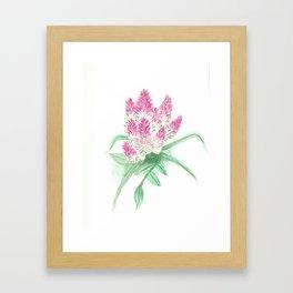 Spiked speedwell Framed Art Print