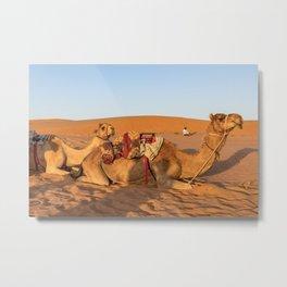Camels in Oman desert Metal Print