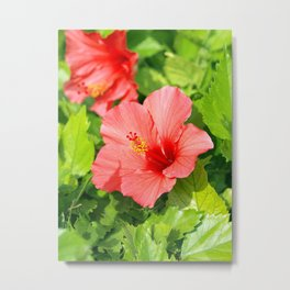 Floral collection. Hibiscus Metal Print