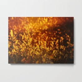 Sunset_24 Metal Print