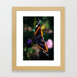 Hello Red Admiral Framed Art Print