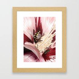 Wasp on flower 7 Framed Art Print