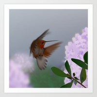 hummingbird Art Prints featuring Hummingbird by dBranes