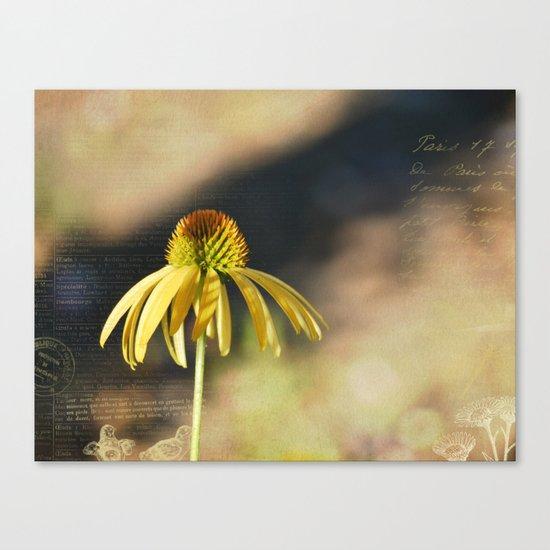 Yellow Echinacea Flower Canvas Print