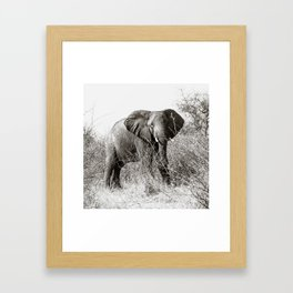 elephant in the bush Framed Art Print