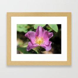 One Wild Rose Framed Art Print