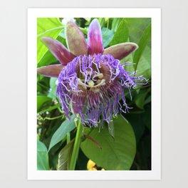Austin's Passionflowers Art Print
