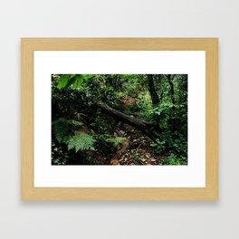 forest 2 Framed Art Print