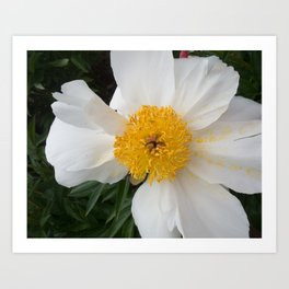 White Beauty by Teresa Thompson Art Print