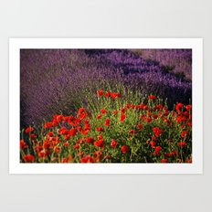 Lavender and Poppies, Hood River Valley Art Print