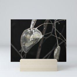 Silver dollar plant Mini Art Print